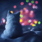 kerst-achtergrond-poes-bokeh