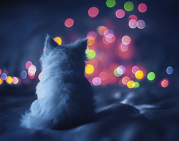 kerst-achtergrond-poes-bokeh